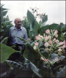 Tom Smith in his Tobacco Field